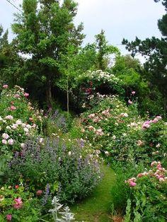 A Rose garden in Sardinia - Antique Roses Forum - GardenWeb