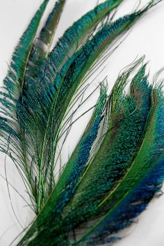 """For bouquets, boutiniers and hairpieces~Natural Peacock Sword Feathers 12""""-14"""" (pkg 12) $5.99 pkg / 3 pkgs $4.29 pkg"""
