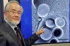 Долголетие и Бессмертие: Нобелевская премия 2016 года: лауреат доказал, что...