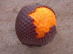 Amazon Oil industry - Buriti  - óleos essenciais - natureza - fruta
