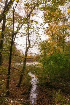 Stream running to Lake Shakamak at Shakamak a State Park in Indiana captured by Wandering Ways Photography 2016