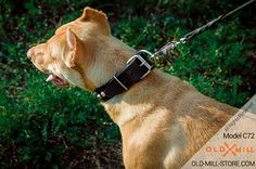 Dog Collar with Strong D-Ring for Pitbull