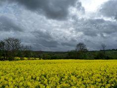 Colza sous ciel torturé... by Aurélie Prouff on 500px Ciel, Country Roads, Clouds, Sky, Photos, Inspiration, Outdoor, Rain, Brittany