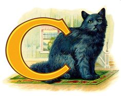 C is for Cat by Gatochy, via Flickr