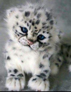 #SnowLeopard #Cub #Animals