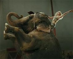 """is the most spectacular show on earth."""" -loveddd water for elephants! Elephant Talk, N Animals, Water For Elephants, Real Fire, Hooray For Hollywood, Vintage Circus, Music Film, Film Stills"""