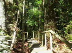 Parry Kauri Park Boardwalk