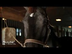If you saw pathology resident Sara Wobker in the halls of UNC Hospitals, you might not imagine that she loves riding horses, particularly the practice of dressage.