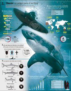 Tiburones - infografia