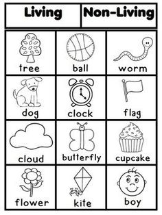 What are some common nonliving things?