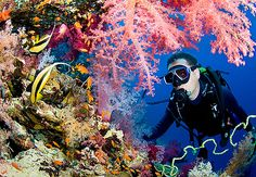 Cairns Liveaboard Dive Tour Review: 2 nights + 1 day
