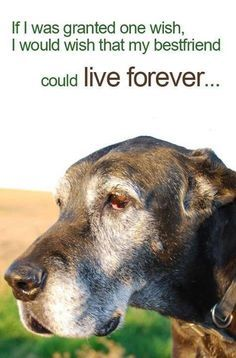Losing A Pet on Pinterest | Pet Loss Grief, Loss Of Pet and Dog ...
