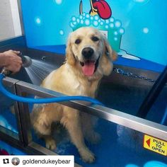 K9000 dog wash demonstration k9000 dog wash pinterest dog tru blu dog wash is the home of the now world famous k9000 diy coin solutioingenieria Image collections
