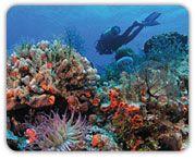 Scuba Diving...Cozumel