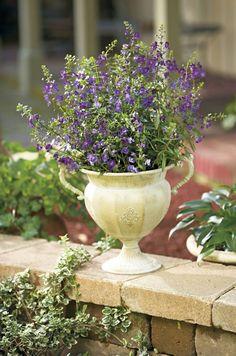 Revive Potted Plants | Birds & Blooms