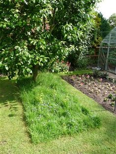 long grass is great for wildlife. Here's how to make it look good too! #homesfornature
