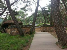 청령포 소나무와 한옥