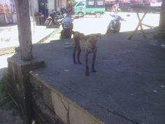We are street-dogs on the Philippines, please help | Indiegogo
