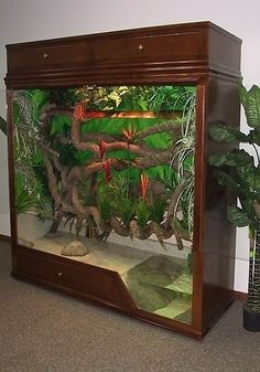 If you are new to owning a bearded dragon pet, setting up a cage for your new pet can seem like a demanding task. Here's a bearded dragon cage setup guide. Reptile Habitat, Reptile Room, Reptile Cage, Reptile Tanks, Reptile Decor, Vivarium, Lizard Cage, Snake Cages, Snake Terrarium