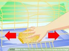 Image titled Make Your Guinea Pig Comfortable in Its Cage Step 12