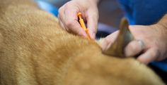 Microchipping your pet is essential. Should anything happen and your dog gets lost, a microchip could help you to track down your beloved pet. Emergency First Aid, Your Pet, Track, Lost, Shit Happens, Health, Runway, Health Care, Trucks
