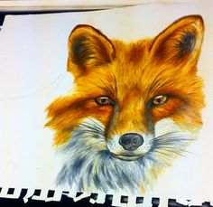 Need to finish this little fox #fox #drawing #draw #portrait #colorpencil #prismacolor #tattoo #fineart #art