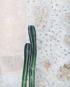annamariaruotsala | cacti