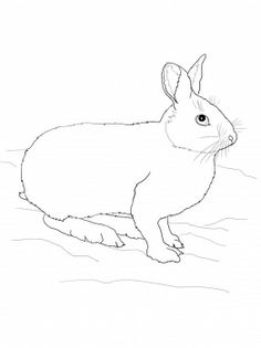 The arctic fox and learning about camouflage simple art for Snowshoe hare coloring page