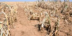 impacts of drought in cape town - Google Search African Countries, Rome Italy, Cape Town, Agriculture, Geography, Survival, Country, Lisa, Pictures