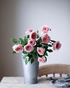 """899 Likes, 12 Comments - .Yukiko Masuda (@nonihana_) on Instagram: """"Abraham Darby🌹Happy Sunday everyone! #englishrose #englishroses #rose #roses ニュアンスカラーのイングリッシュローズ…"""""""