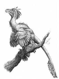Microraptor gui by =Apsaravis on deviantART