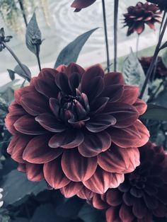 b531f272cae Deep Red Botanics Flower Floral Aesthetic Travel Photography Filter  Photography Filters