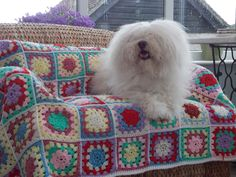 My pooch on my beautiful crocheted granny square blanket.