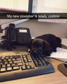 Funny Animal Pictures Of The Day – 29 Pics