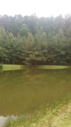 Hermoso paisaje. Laguna larga. Golf Courses, Life Images, Beautiful Landscapes