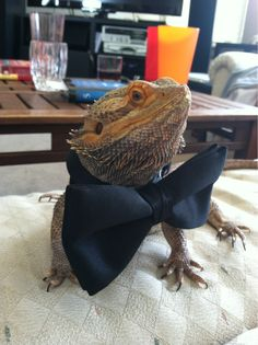 We should have done this with your beardies.. we can still use your chameleons?