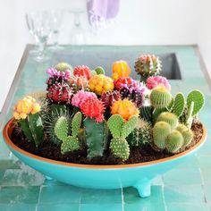 15 ideas plantas de interior