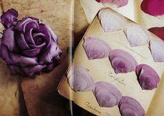 KIRSTEN RANDOLPH-NEW YORK: A Rose by No Other Name; Maison Legeron