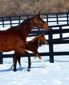 Havre de Grace and her 2014 Tapit filly