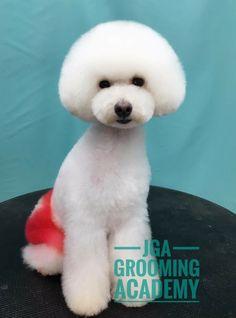 Poodle with mushroom head