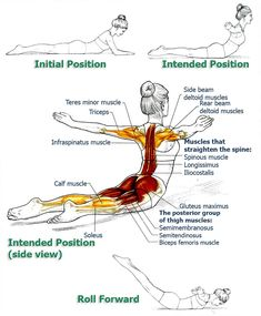 Office workers and anybody who tends to sit a lot will find these exercises very helpful in alleviating problems and symptoms associated with prolonged sitting. If you are diagnosed with a spinal or back injury, consult with your doctor if these exercises Fitness Workouts, Yoga Fitness, Fitness Motivation, Health Fitness, Bike Workouts, Swimming Workouts, Cycling Motivation, Swimming Tips, Posture Exercises
