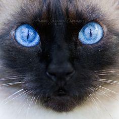 Blue Exorcist by darkcalypso.deviantart.com on @DeviantArt