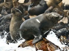 Seal Island off Cape Town – South African Tourism