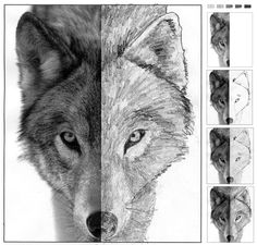 Art - How to Draw (finish drawing) a Wolf (good idea for drawing practice; not necessarily using a wolf photo...)