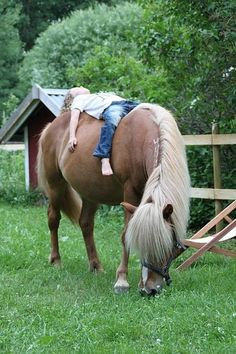 Used to do this with my old QH gelding, except lying on my belly with a good book while he grazed. RIP Cody