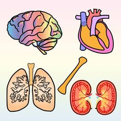 Science Biology, Preschool Science, Elementary Science, Health Activities, Activities For Kids, Kids Education, Physical Education, Clear Lungs, Body Organs