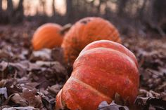 Forgotten Pumpkins by Holly Clark