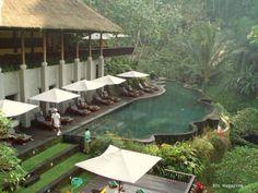 Maya Ubud swimming pool  source: 30smagazine.wordpress.com