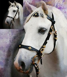 Oilpainting from you photo. Portrait of a horse. By Patrycja Lewicka
