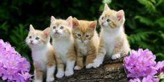 Gülşen Kayıkcı: Kedilerin Sahibini Görünmeyen Varlıklardan Koruduğunu Biliyor Musunuz ?